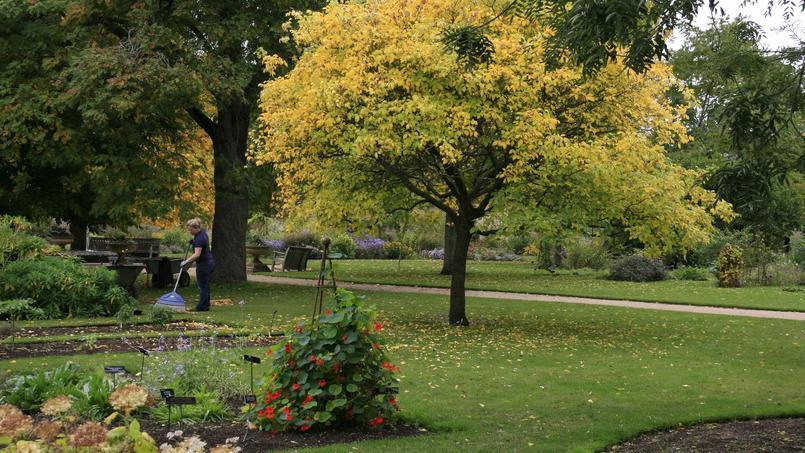 L 39 atmosph re irr elle du jardin botanique d 39 oxford for Le jardin katalog 2015