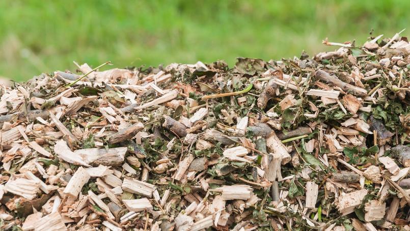 Haie: comment bien valoriser les déchets de taille ?