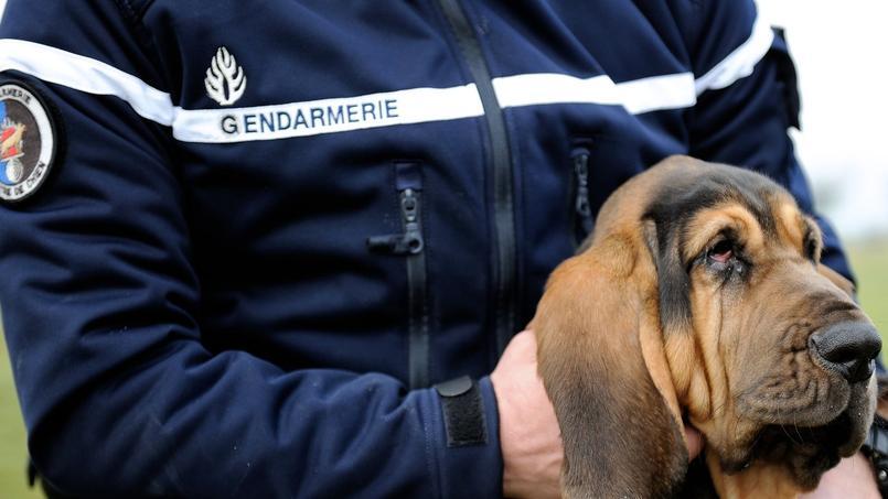 Des maîtres-chiens ont été mobilisés pour démanteler un réseau de trafic de drogue.