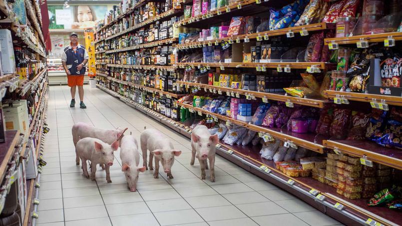 En contrepartie de cette initiative, les distributeur exigent la fin des actions des producteurs de porc dans les grandes surfaces.