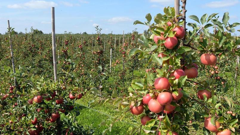 Au total, 12% des légumes et fruits produits en France sont perdus, chaque année, soit 336 000 tonnes de fruits, selon une étude du Cabinet Gressard. Crédits Photo: Janek Skarzynski/AFP