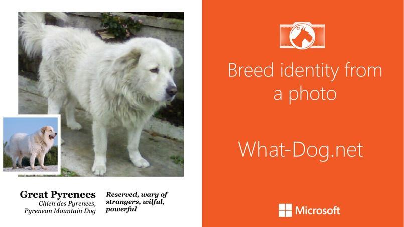 Résultat de recherche sur fetch!, avec un chien des Pyrénées.