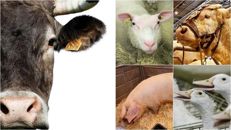 Des milliers d'animaux font le déplacement chaque année à la Porte de Versailles.