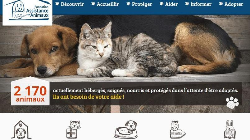 Les pratiques douteuses de la Fondation Assistance aux animaux