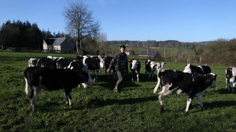 Un éleveur à Bernières-Le-Patry - AFP