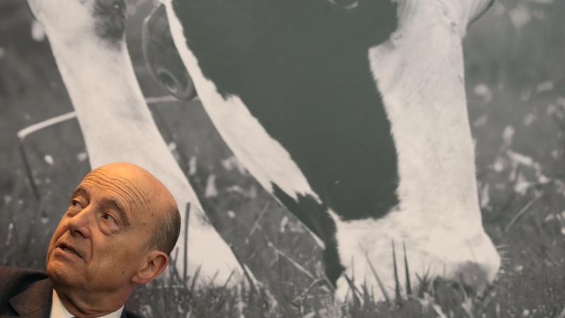 Alain Juppé, jeudi matin, au Salon de l'Agriculture.