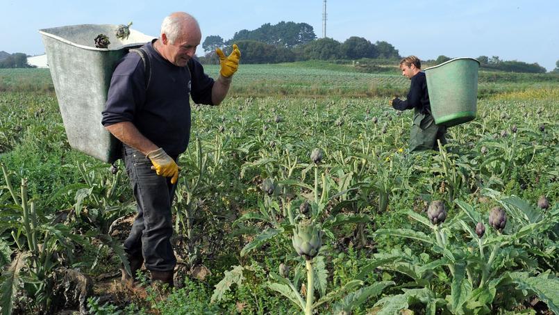 Les agriculteurs pourront noter leurs recrues avec Yojob Agriculture. Crédits photo: FRED TANNEAU / AFP