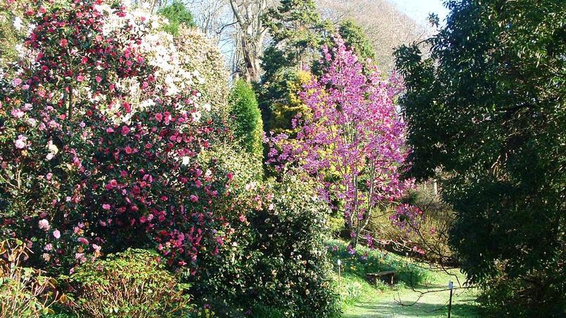 Les magnolias font le printemps du jardin anglais de l 39 ann e for Jardin anglais fuu