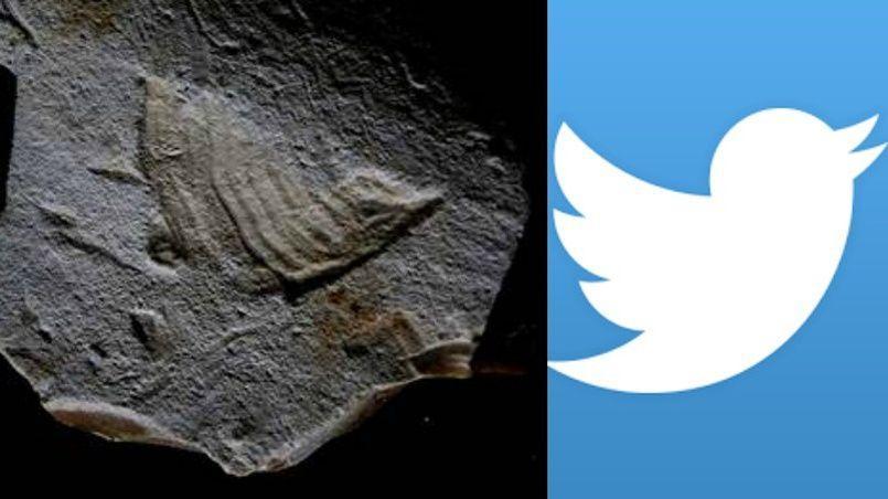 Analysé en Espagne, le morceau de silex est une œuvre d'art datant de la période du Paléolithique supérieur.