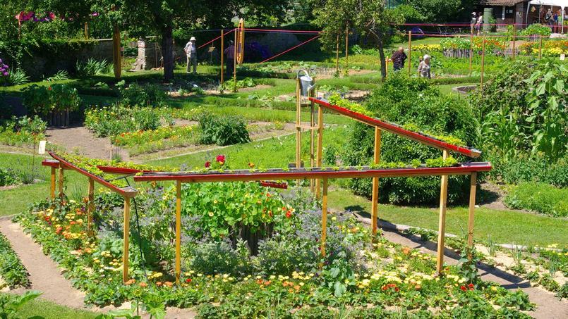 Potager quelles associations de plantes choisir for Choisir plantes jardin