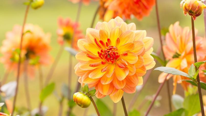 plantez des fleurs et des l gumes pour l 39 automne. Black Bedroom Furniture Sets. Home Design Ideas