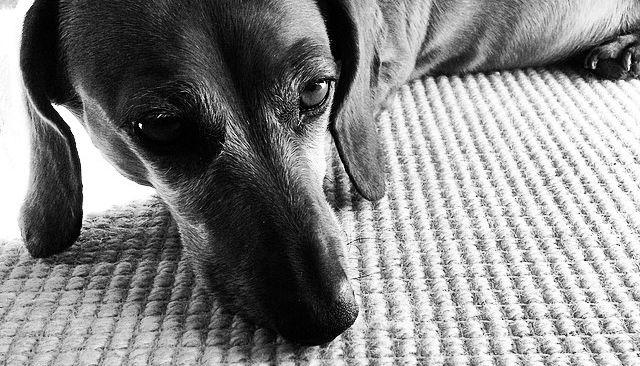 Les photos Instagram pourraient permettre de repérer des comportements dépressifs