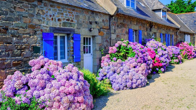 Jardin des astuces pour obtenir de beaux hortensias for Grand jardin en friche