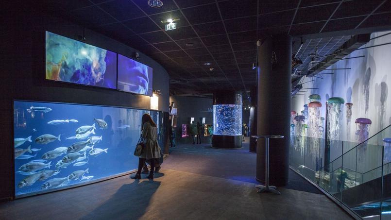 L 39 aquarium de paris f te ses 10 ans for Aquarium de paris jardin du trocadero