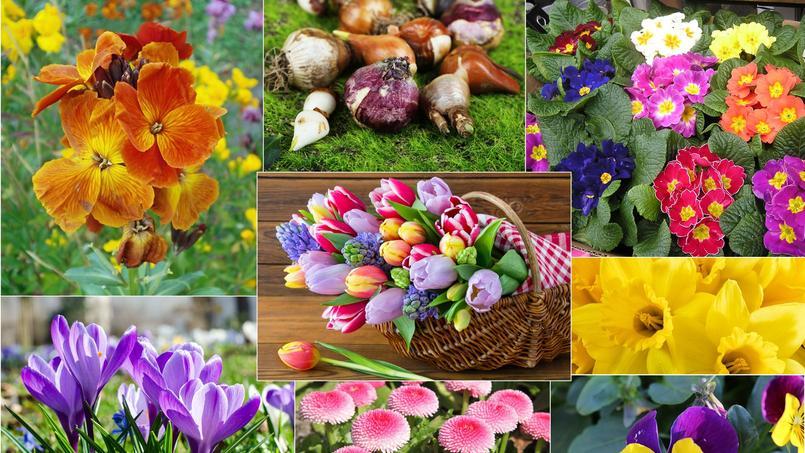 Jardin plantez maintenant les fleurs du printemps for Fleurs jardin printemps