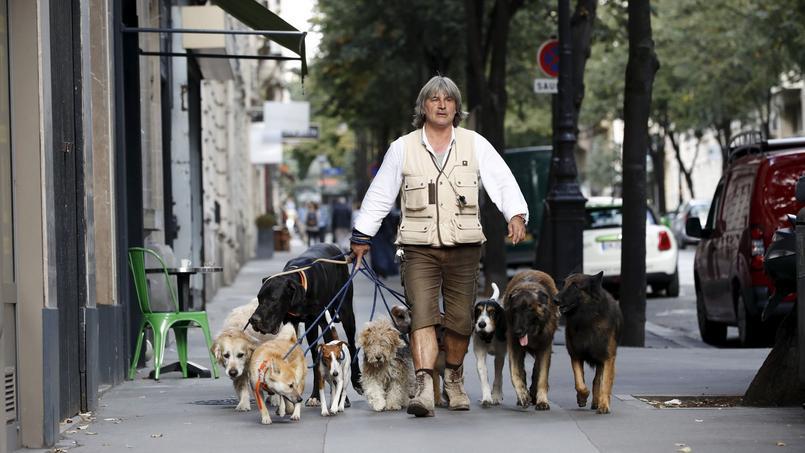 Franck Philip fait courir et jouer les chiens tout en veillant à leur éducation.