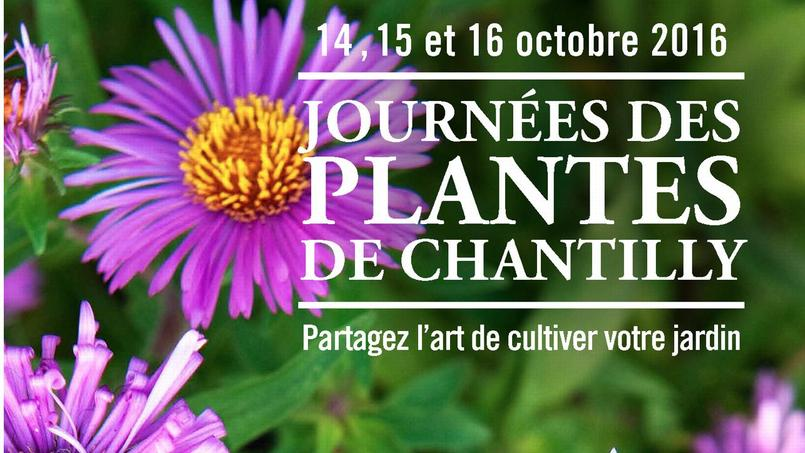 Journ es d 39 automne de chantilly les plantes c t coeur - Fete des plantes chantilly ...