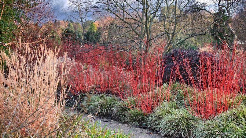 Un livre sublime loue la beaut du jardin m me en hiver - Jardin d hiver de la berteliere ...