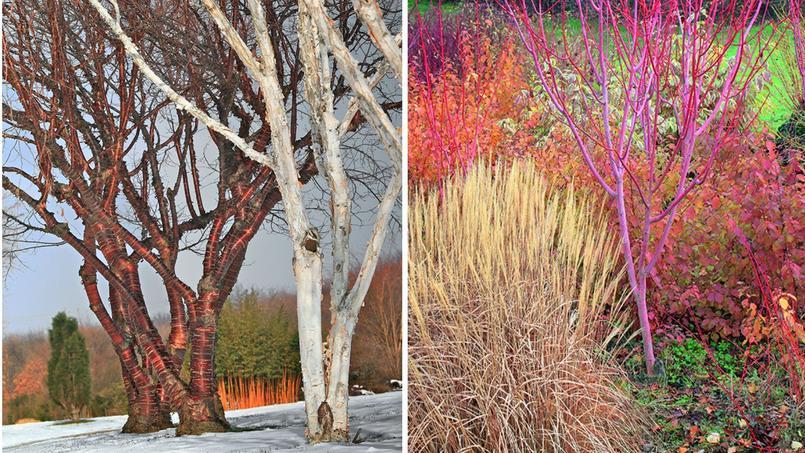 2017 le calendrier des jardins qui vous rendra heureux for Jardin anglais en hiver