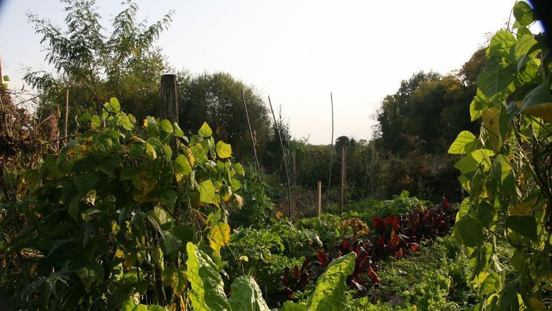 Trois quarts des variétés de fruits, légumes et céréales cultivés ont disparu en cent ans