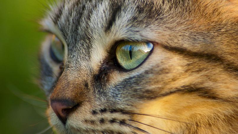 Le Parti animaliste a l'intention de créer un Ministère le la Protection animale - Crédits Photo: Flickr