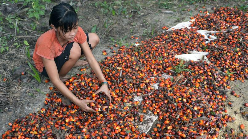 Septembre 2015, île de Sumatra, Indonésie. Une jeune fille de 13 ans travaillant dans une plantation d'huile de palme.