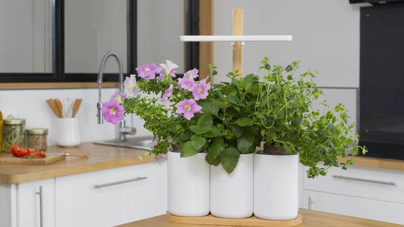 Pétunia, mélisse, menthe: des fleurs et des aromatiques fraîches à portée de main. DR