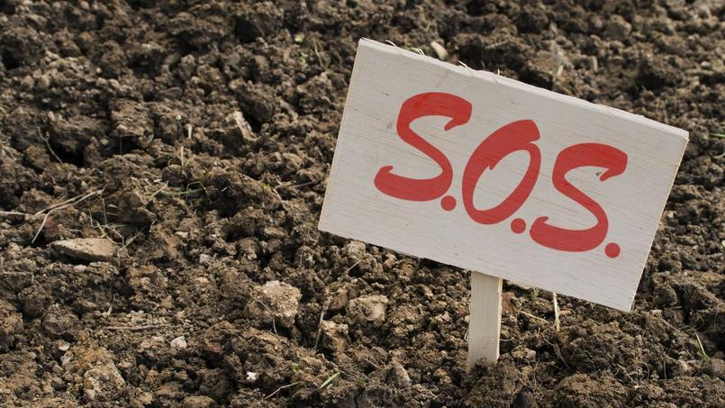 Comment planter conifères et graminées dans de l'argile ?