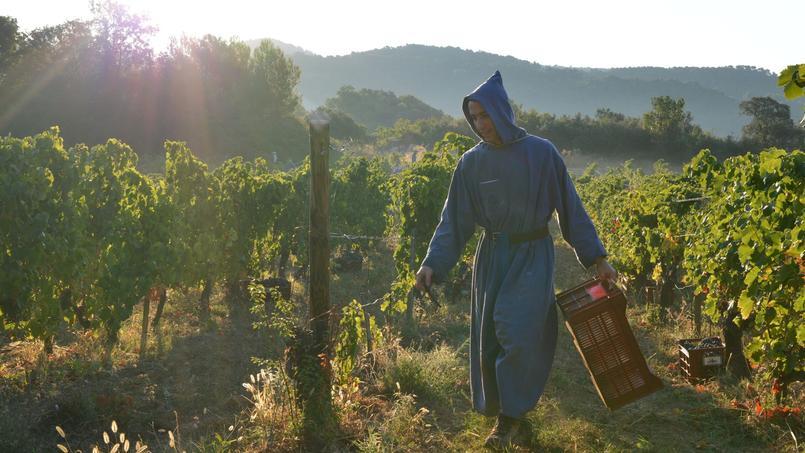 Moine bénédictin en plein travail de la vigne dans le domaine des Abbayes du Barroux et du Vignoble-Caritas.