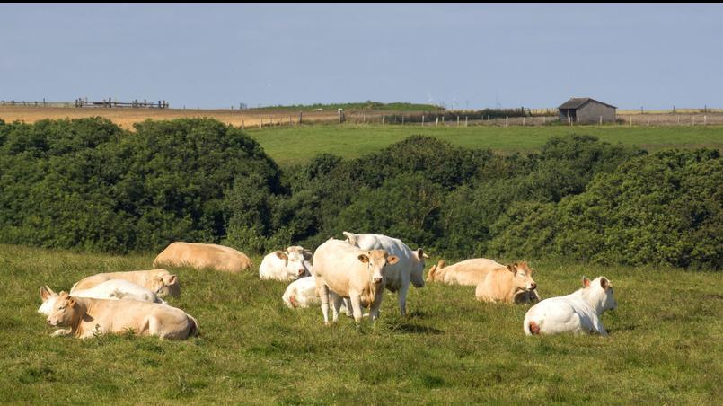 La Coordination Rurale mise sur des «exploitations respectueuses de l'environnement, des êtres humains et des animaux» . Ici un élevage à Divine en Normandie.