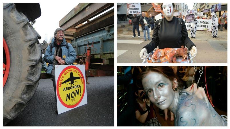 Des opposants à l'aéroport Notre-Dame-des-Landes (à gauche), une militante de l'association L214 (en haut à droite) et une femme déguisée en baleine, pour une opération de Sea Sheperd contre la pêche intensive (en bas à droite).