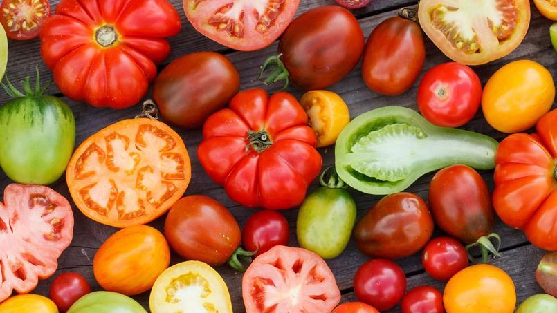 Depuis une vingtaine d'années, à la suite de croisements entre plants anciens et modernes, les variétés hybrides de tomates se sont multipliées.