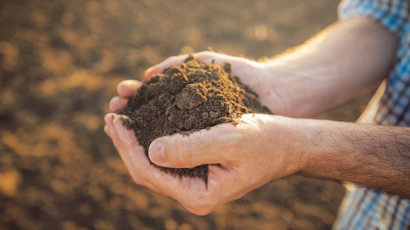 Jardin: et si vous faisiez connaissance avec votre sol ?