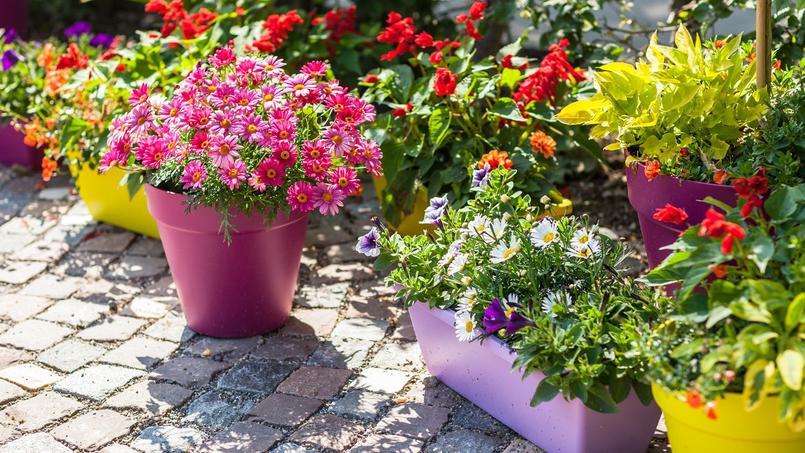 Balcon terrasse cour pav e des ambiances pleins pots - Fleurir sa terrasse exterieure ...