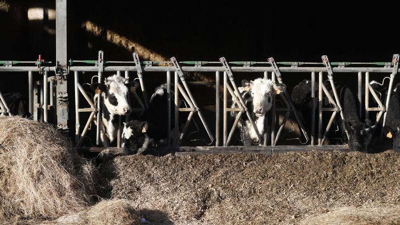 Une exploitation agricole installée à Juilley, près de Granville dans la Manche.