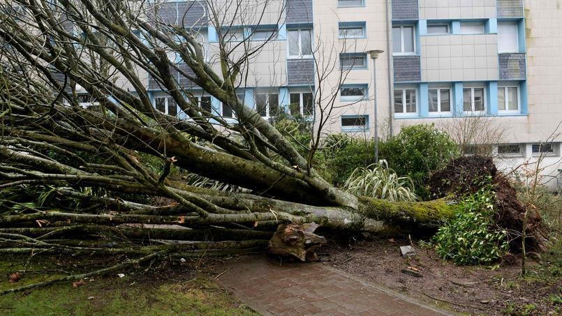 Les frais de déblaiement des arbres seront également pris en charge lorsqu'ils ont causé un dommage