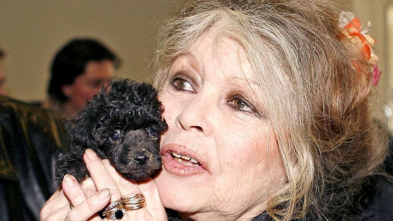 Brigitte Bardot a dit tout le mal qu'elle pensait du cinéma français aujourd'hui dans une interview accordée au magazine Valeurs Actuelles.