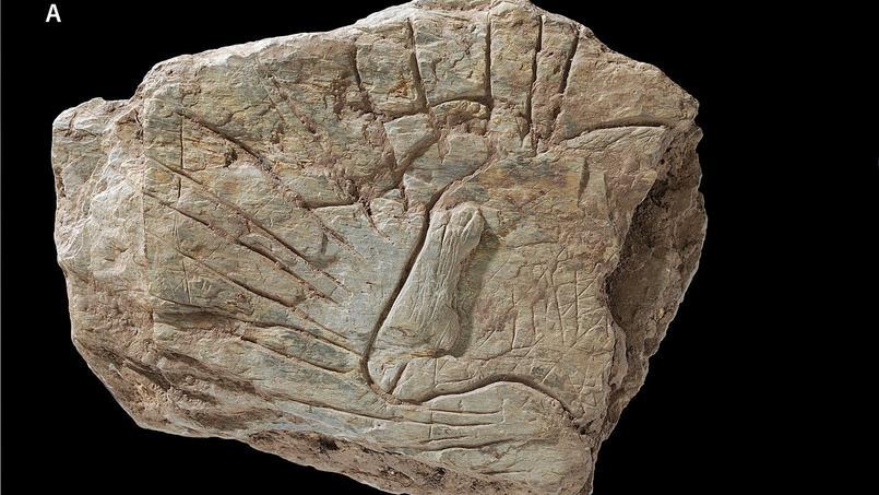 Sur le site du Rocher de l'Impératrice, dans le Finistère, des gravures rupestres vieilles de 14.000 ans ont été découvertes (visuel de l'article publié par la revue scientifique  Plos One).