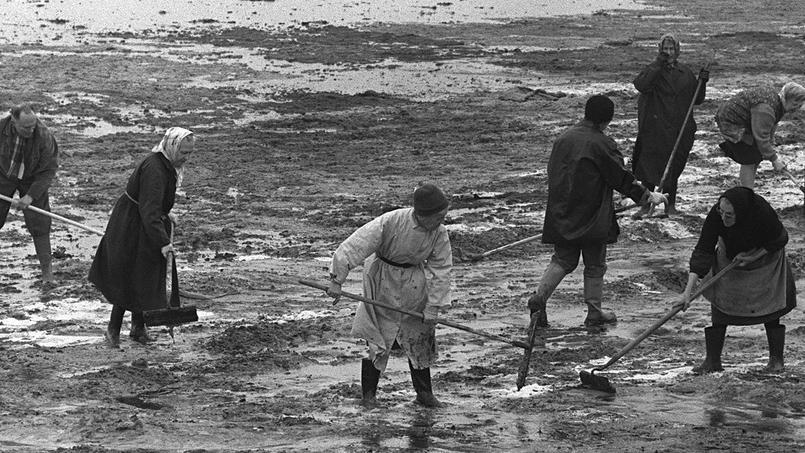 De nombreux volontaires nettoient les plages, ici à Port-Blanc en Bretagne, après la marée noire provoquée par le navire Torrey Canyon échoué près des côtes britanniques le 18 mars 1967.