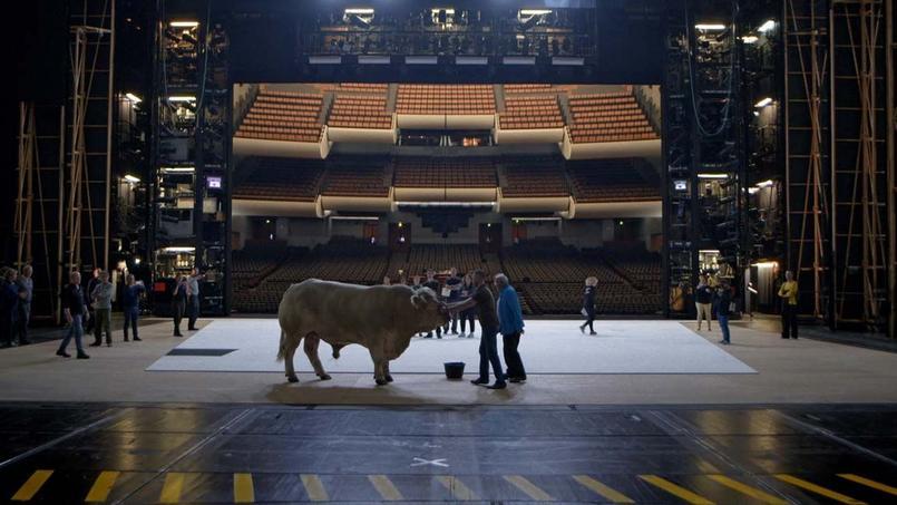 Le fameux taureau Easy-Rider, qui fut en 2015 la vedette et la bête noire des commentateurs de Moïse et Aaron de Schoenberg à l'Opéra Bastille.