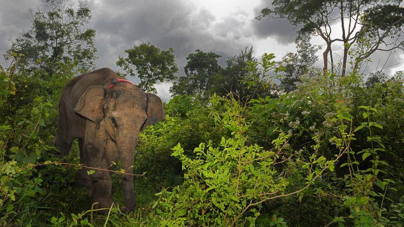 Le braconnage d'espèces menacées comme les tigres et les éléphants est signalé dans au moins 43 sites de l'Unesco.