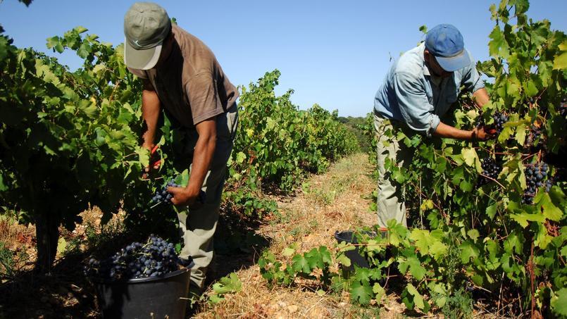 La viticulture fait partie des secteurs qui recruteront le plus en 2017, d'après l'enquête annuelle sur les «Besoins en main d'oeuvre des entreprises», menée par Pôle Emploi.