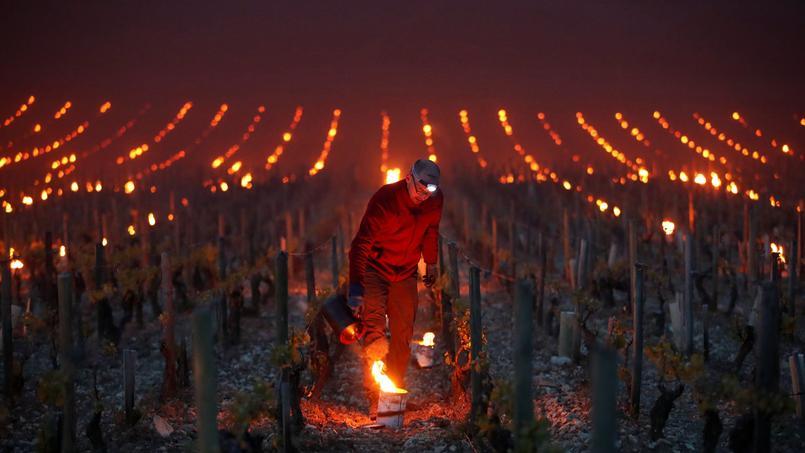 Réveillés à 2 heures du matin par un SMS du système de surveillance installé dans leurs vignes, des viticulteurs de lYonne se sont précipités pour allumer des braseros de fortune, utilisés depuis des siècles pour réchauffer les bourgeons en cas de gel tardif.