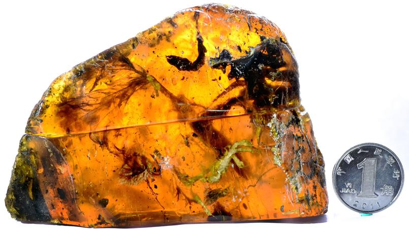 En Birmanie, un oisillon remontant au temps des dinosaures a été retrouvé parfaitement conservé dans de l'ambre. Crédit: Lida Xing, China University of Geosciences, Beijing (CUGB)