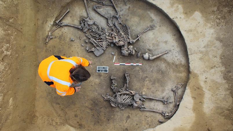 Un archéologue d'une équipe de fouille découvre des squelettes fossilisés, à Achenheim, dans le Nord de la France.