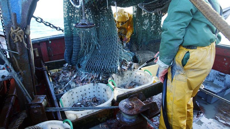 Près de 10% de la pêche annuelle serait rejetée en mer chaque année.