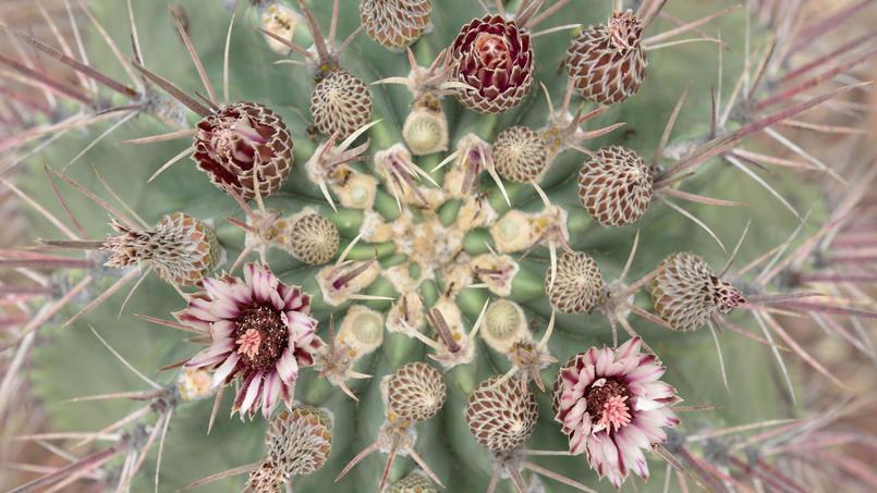 Des cactus dans la Vallée de Tehuacán-Cuicatalán, au Mexique - Crédit: Diana Hernandez/© CHAC