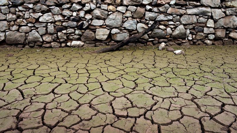 En Espagne, la canicule a fait des ravages cet été.