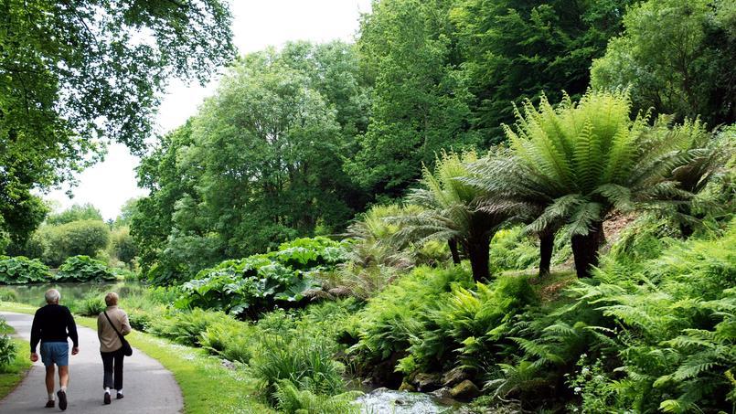 Dans le jardin du Conservatoire botanique national de Brest. Au premier plan à droite de somptueuses fougères arborescentes suivies de buissons de gunnères ou rhubarbes géantes.
