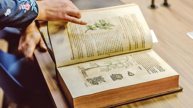Plongée dans l'univers des livres de jardin